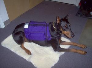Balance Service Dog Agencies In Hawaii