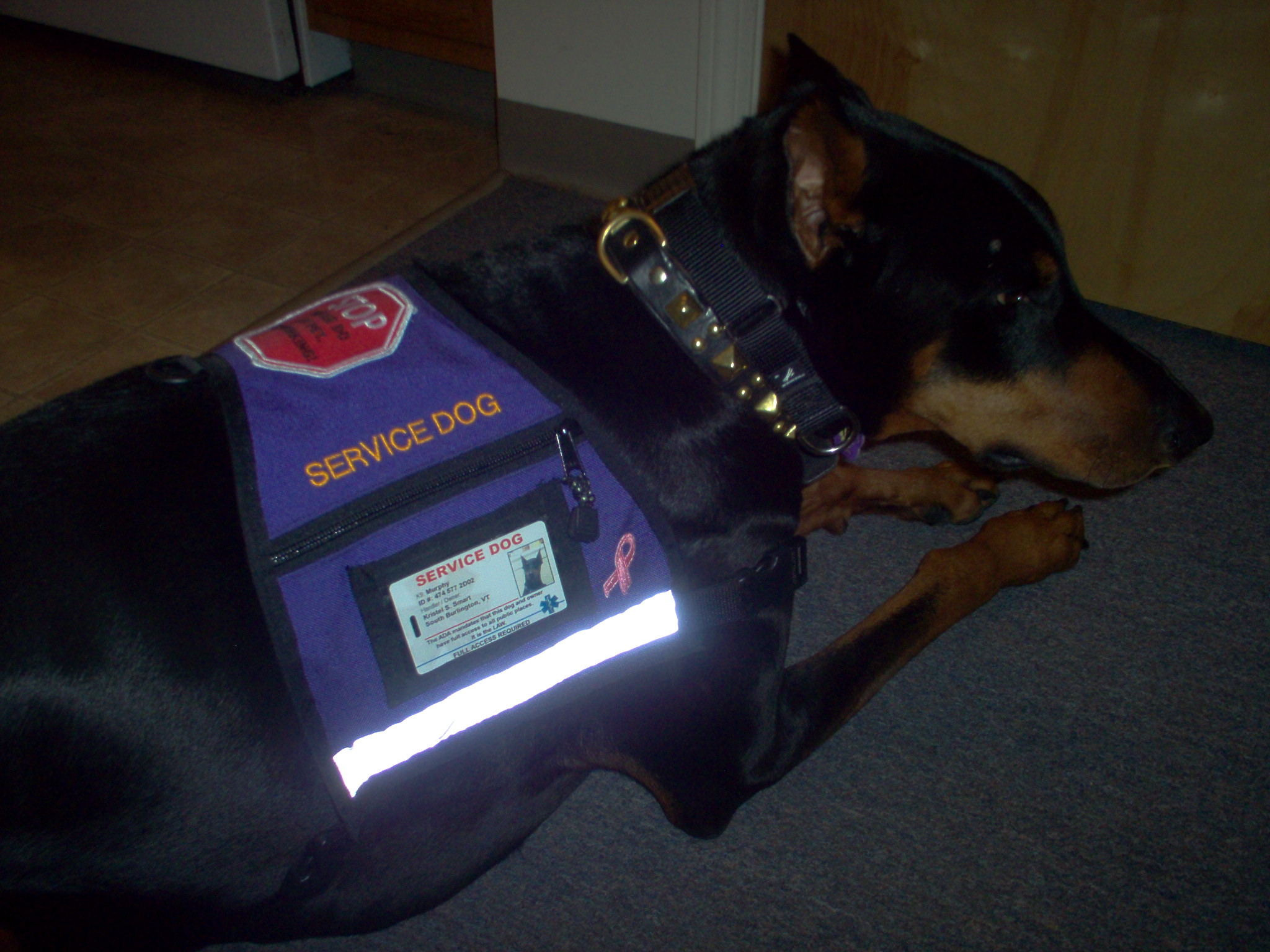 Support Dog Vest Canada