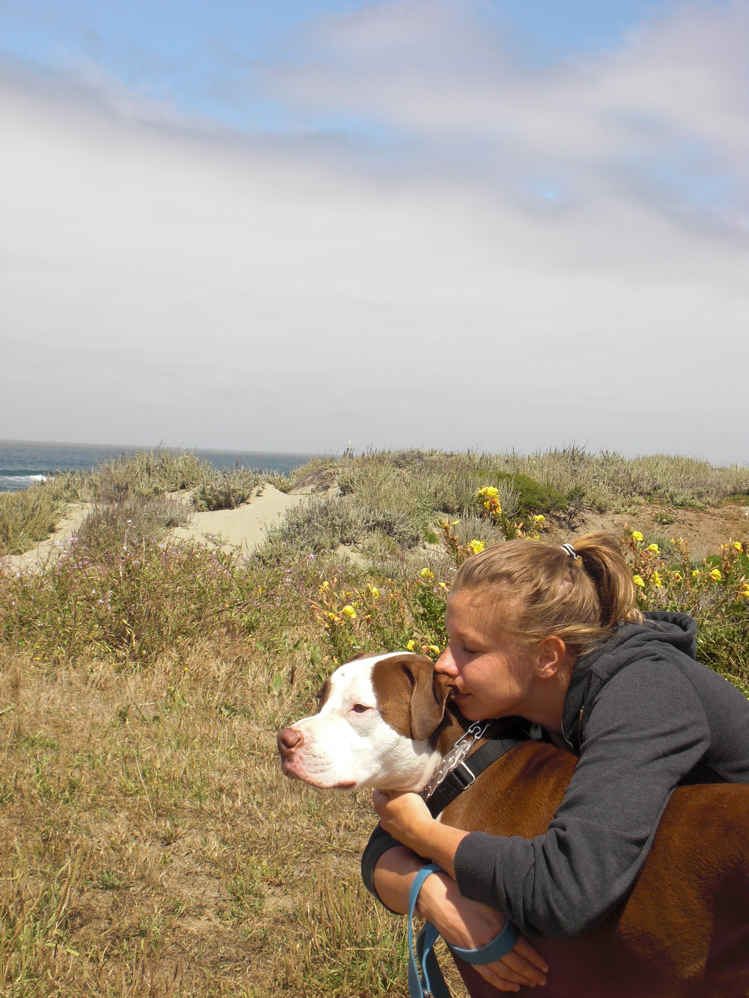 guest post a love letter to boo radley notes from a dog walker so