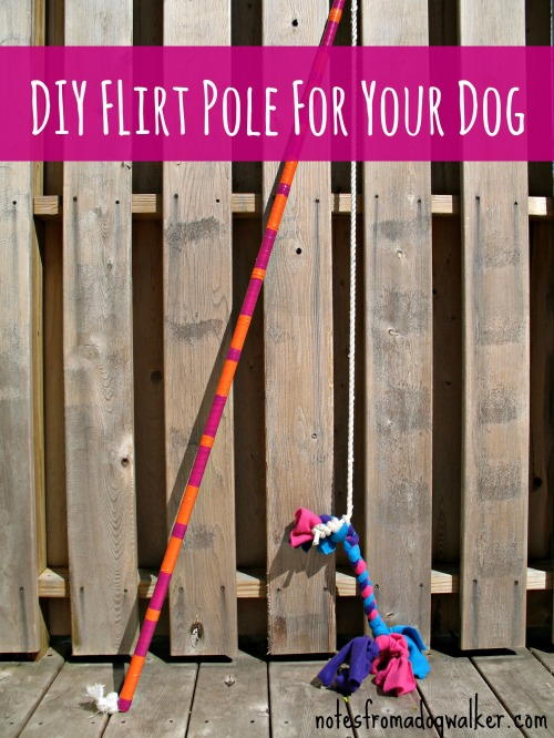 notes from a dog walker flirt pole Flirt poles are not only a huge amount of fun for both owner and dog to play with, they are also an excellent training aid now widely used by dog trainers.