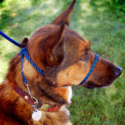 A Head Harness You Won't Hate Notes From Dog Walker. The Infinity Lead Is One Piece So You Basically Make A Big Loop Around Their Head Like Slip And Then Twist It To Over Nose. Wiring. Homemade Dog Pulling Harness At Scoala.co