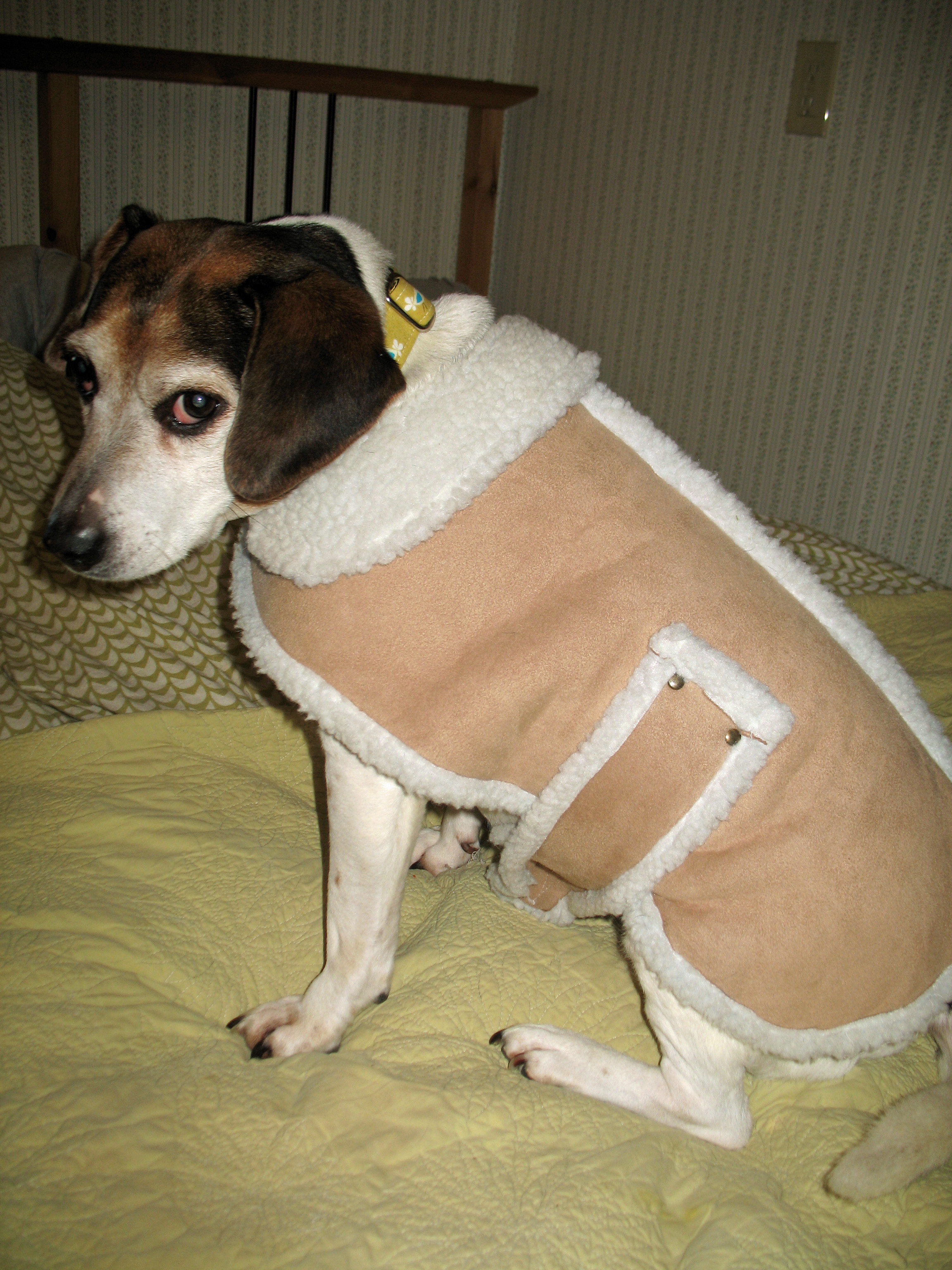 Junk in the Front: Dog Coats that Fit | notes from a dog walker