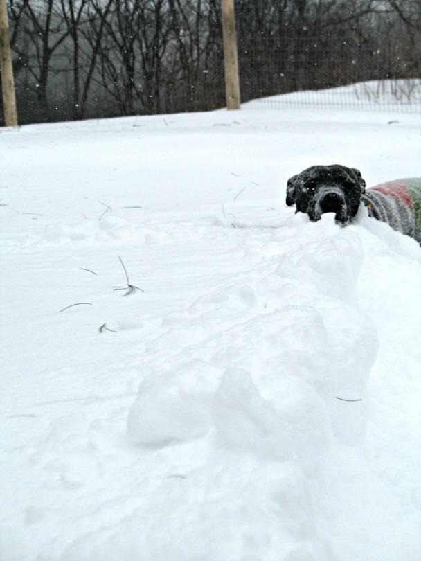 Snow Face.