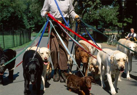 This will NEVER be me. I don't roll with this many dogs on leash at once.