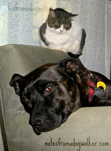 Boogie and one of our cats, Gizmo,