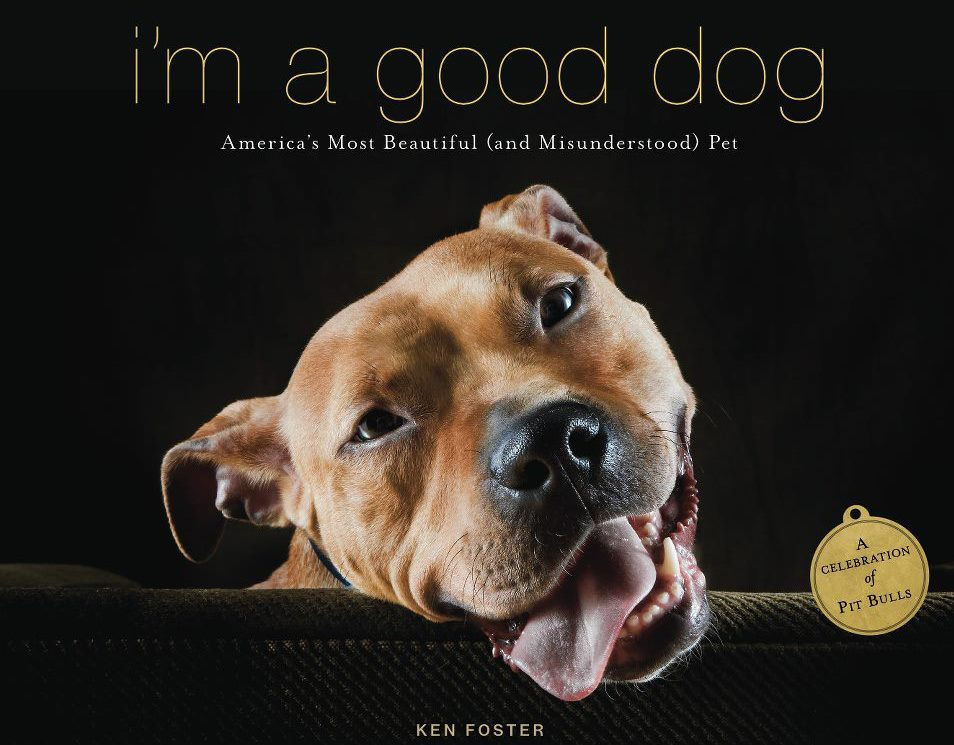 Famous Quotes About Pit Bulls responsible pit bull