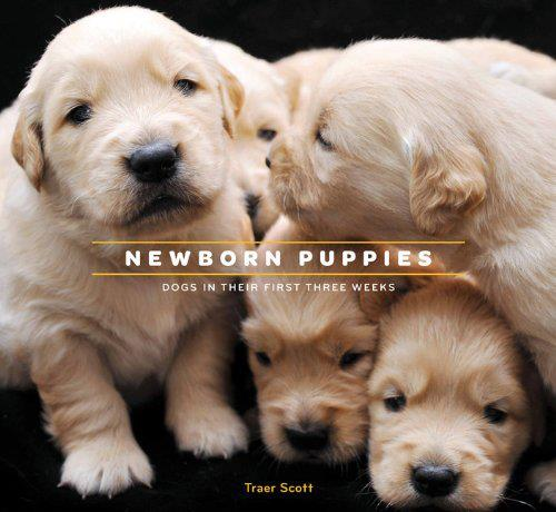 newborn puppies