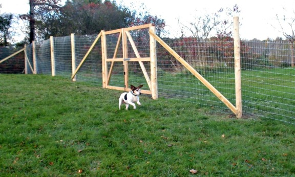 We waited and saved for 5 years until we could put up a fence. This was Birdie's first run in her new, fenced-in yard!