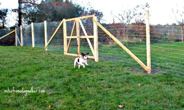 birdie fence