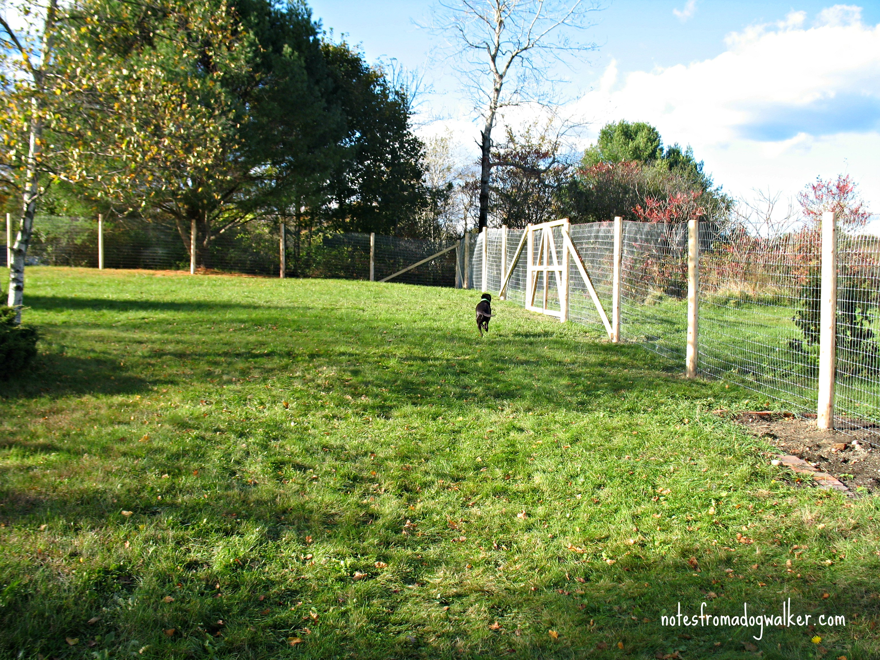 peace in the yard: 7 ways to dog proof your fence | notes from a dog