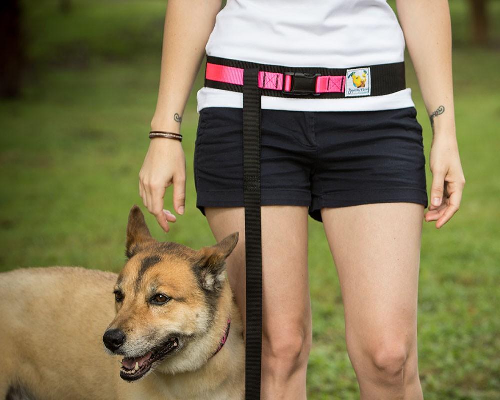leash-belt-standardi-dog